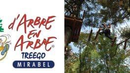 PHOTO_ARBRE-EN-ARBRE-NEW